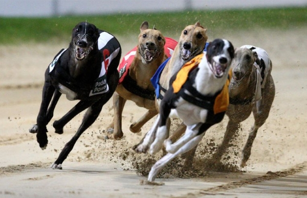 West Virginia Greyhound racing