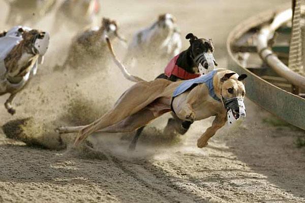 Florida greyhound racing ban.