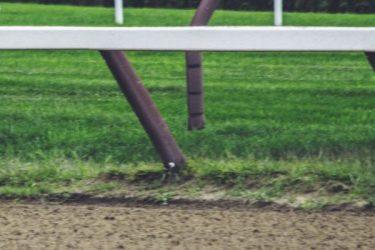 west virginia greyhound